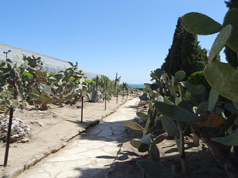 Университетска ботаническа градина
